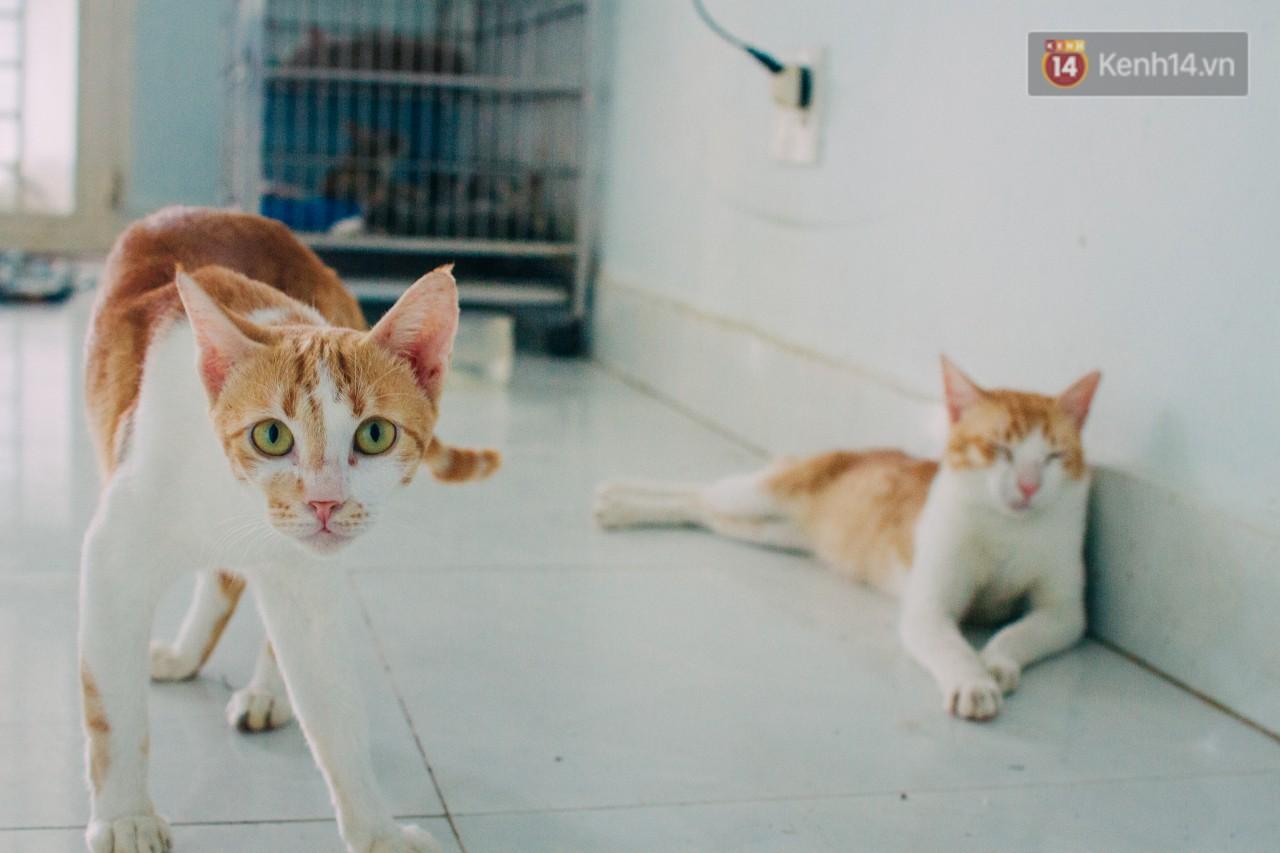 Người phụ nữ hy sinh 20 năm tuổi xuân để cưu mang hàng trăm chú mèo hoang ở Sài Gòn - Ảnh 5.