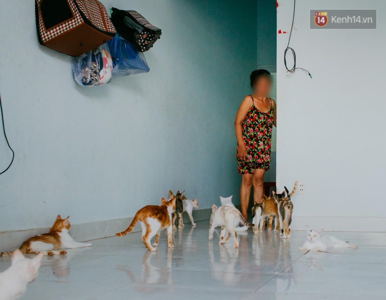 Người phụ nữ hy sinh 20 năm tuổi xuân để cưu mang hàng trăm chú mèo hoang ở Sài Gòn - Ảnh 1.