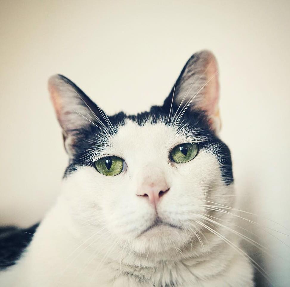 Chú mèo Nhật Bản với gương mặt buồn rười rượi, thương ơi là thương! - Ảnh 1.