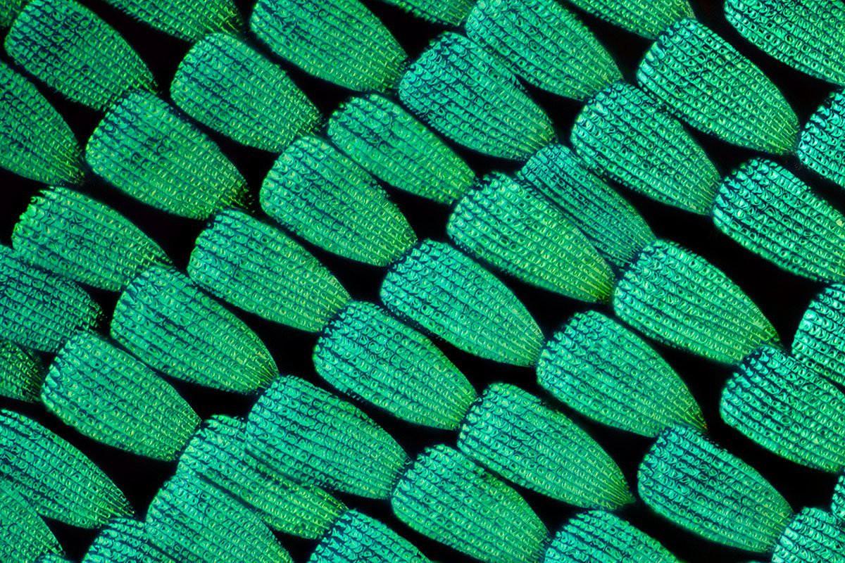 15 hình ảnh đồ vật được phóng đại qua kính hiển vi, hình số 9 khiến bạn phải bất ngờ - Ảnh 1.