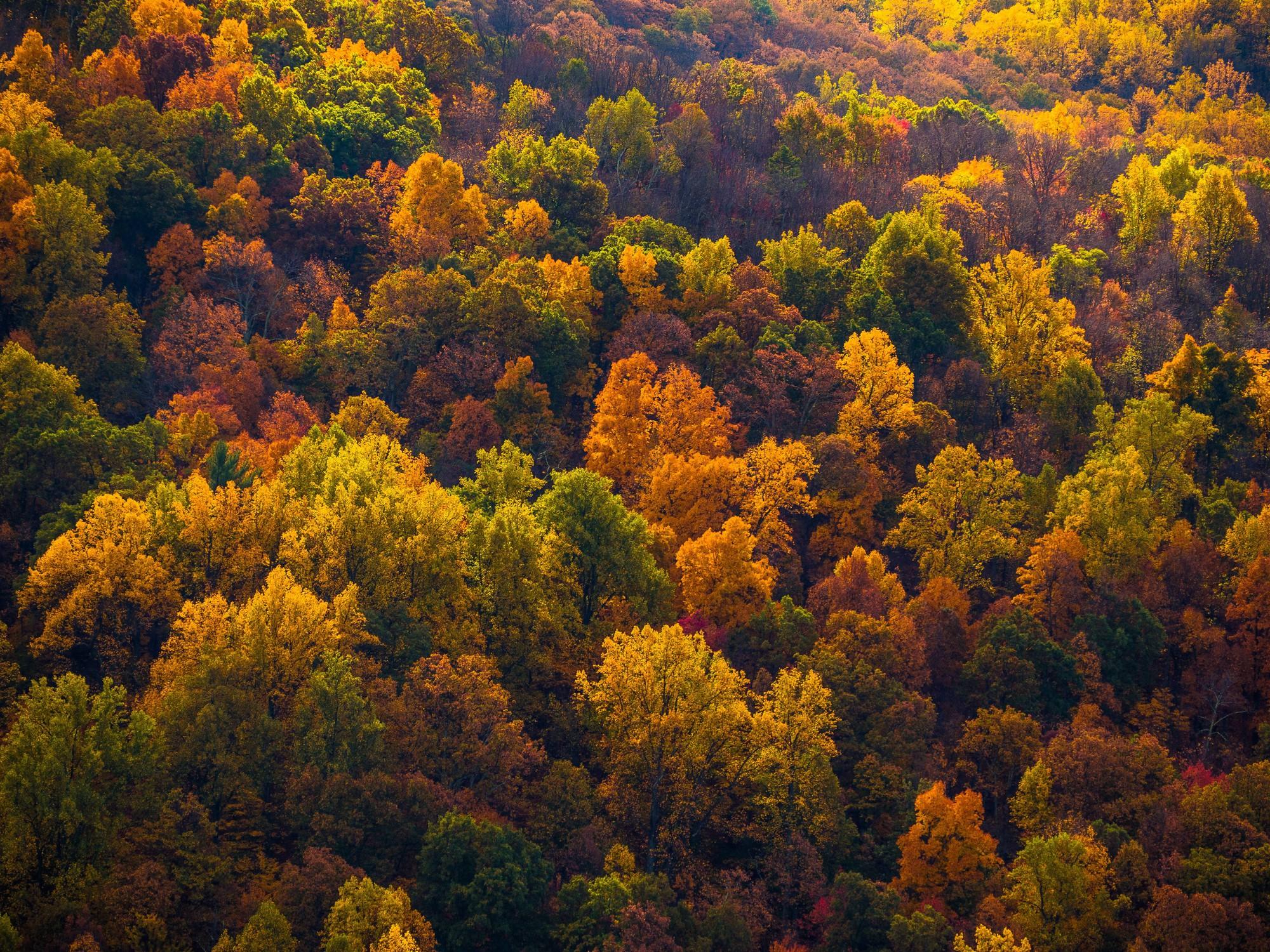 Ngắm phong cảnh đẹp đến ngoạn mục của những khu rừng vào mùa thu - Ảnh 30.