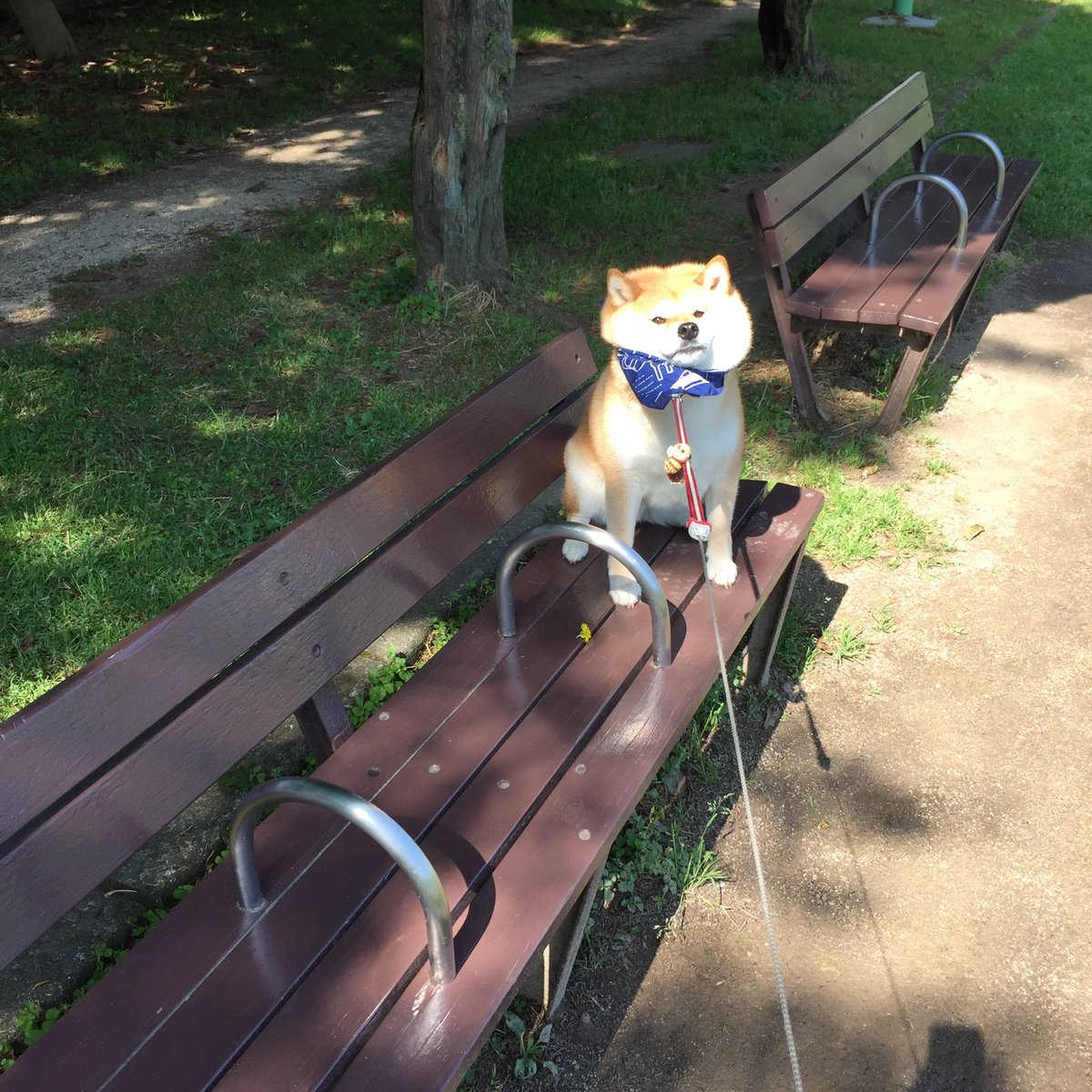 Nàng cún Shiba lầy lội: đã ra đường là không bao giờ chịu về nhà - Ảnh 10.