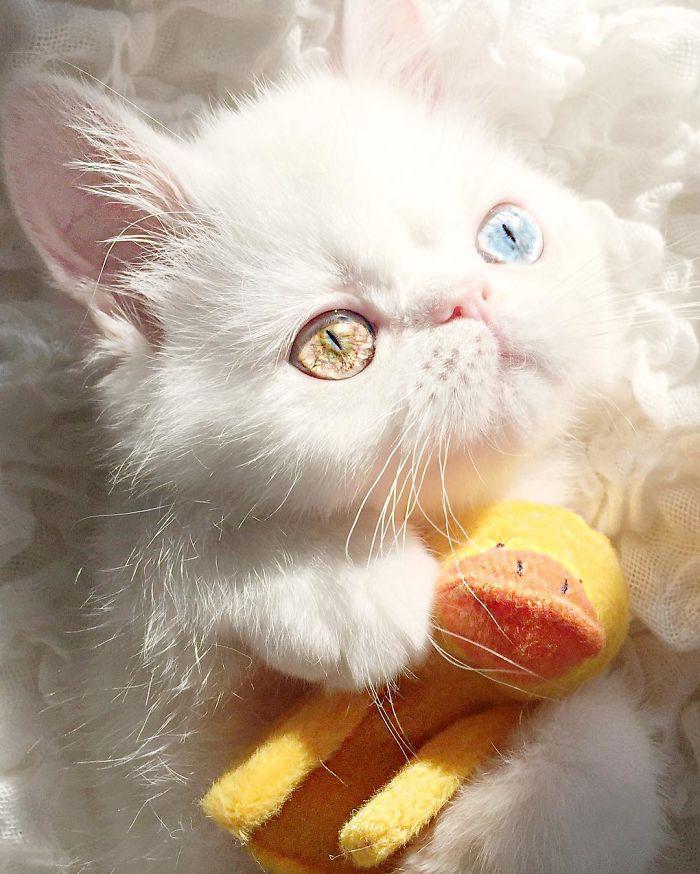 Chú mèo xinh đẹp sở hữu đôi mắt hai màu lấp lánh tựa pha lê - Ảnh 19.
