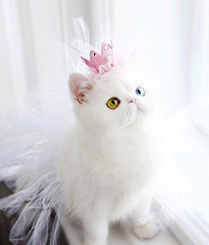 Chú mèo xinh đẹp sở hữu đôi mắt hai màu lấp lánh tựa pha lê - Ảnh 7.