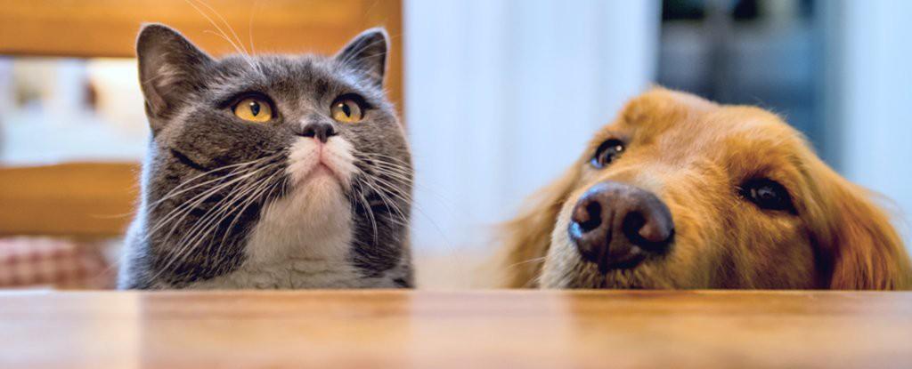 Chó hay mèo thông minh hơn? Cuối cùng khoa học cũng có kết luận rồi! - Ảnh 2.