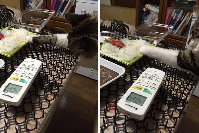 Người Nhật mua bẫy gai để ngăn mèo chạy nhảy lung tung, kết quả khiến ai cũng dở khóc dở cười - Ảnh 17.