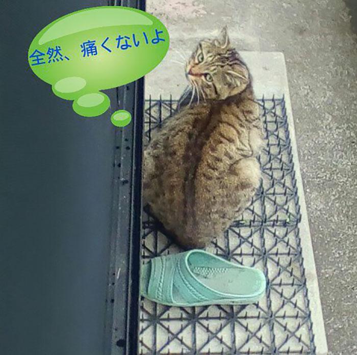 Người Nhật mua bẫy gai để ngăn mèo chạy nhảy lung tung, kết quả khiến ai cũng dở khóc dở cười - Ảnh 18.