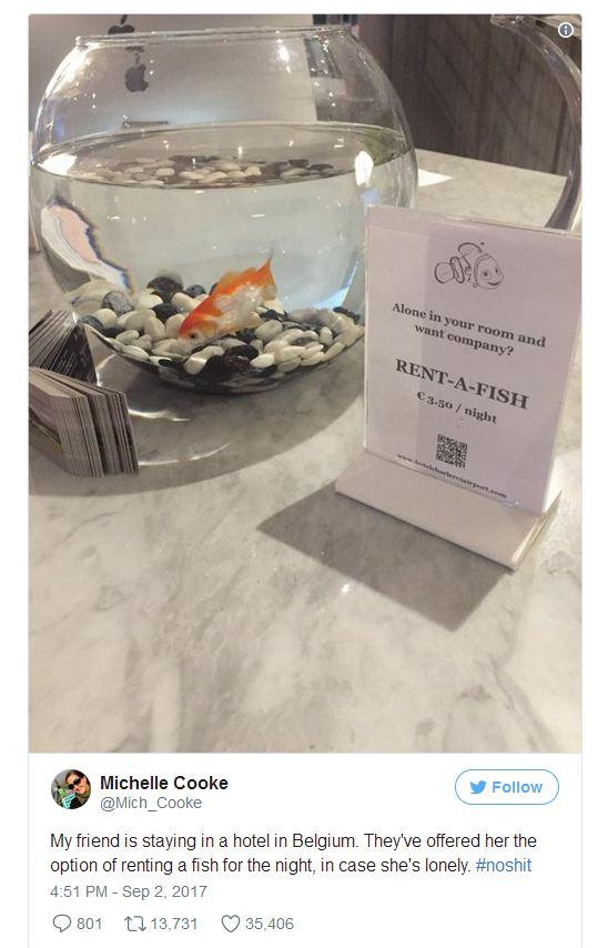 Kỳ lạ: Khách sạn cho thuê cá vàng giúp xoa dịu những tâm hồn cô đơn thuê phòng một mình - Ảnh 1.