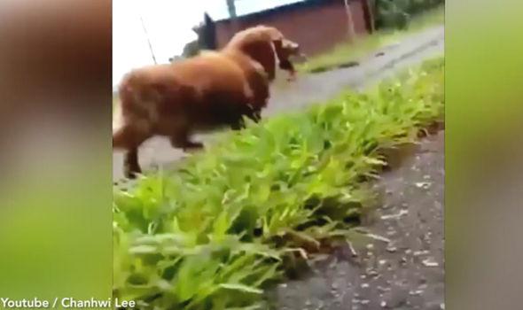 Chủ giả vờ ngất xỉu để xem phản ứng của chó và cái kết vừa buồn cười, vừa cay cú - Ảnh 3.