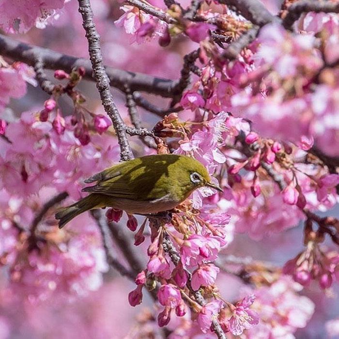 "Résultat de recherche d'images pour ""mùa xuân và cây đàn"""