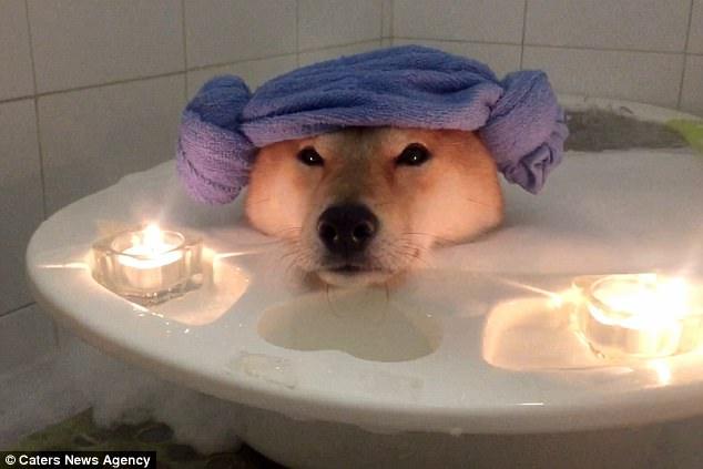 Nhìn boss tắm bồn trong ánh nến lung linh mới thấy, đến chú chó còn sướng hơn mình - Ảnh 3.