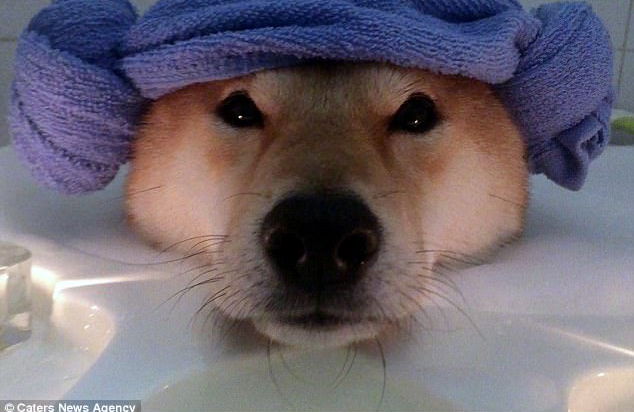 Nhìn boss tắm bồn trong ánh nến lung linh mới thấy, đến chú chó còn sướng hơn mình - Ảnh 4.