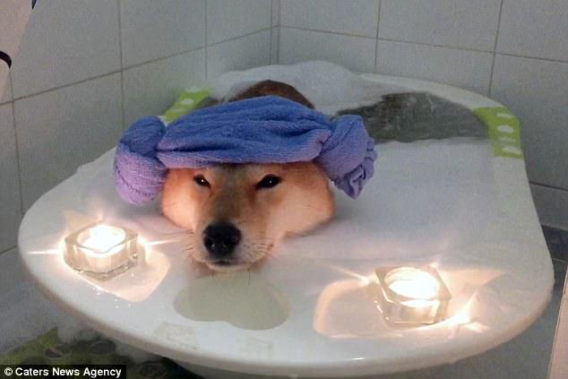 Nhìn boss tắm bồn trong ánh nến lung linh mới thấy, đến chú chó còn sướng hơn mình - Ảnh 2.