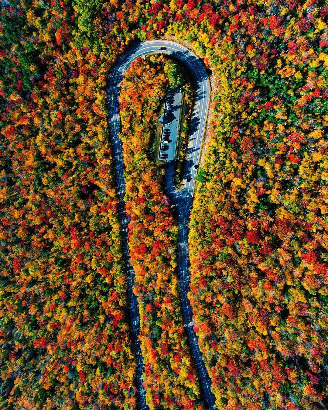 Ngắm phong cảnh đẹp đến ngoạn mục của những khu rừng vào mùa thu - Ảnh 1.
