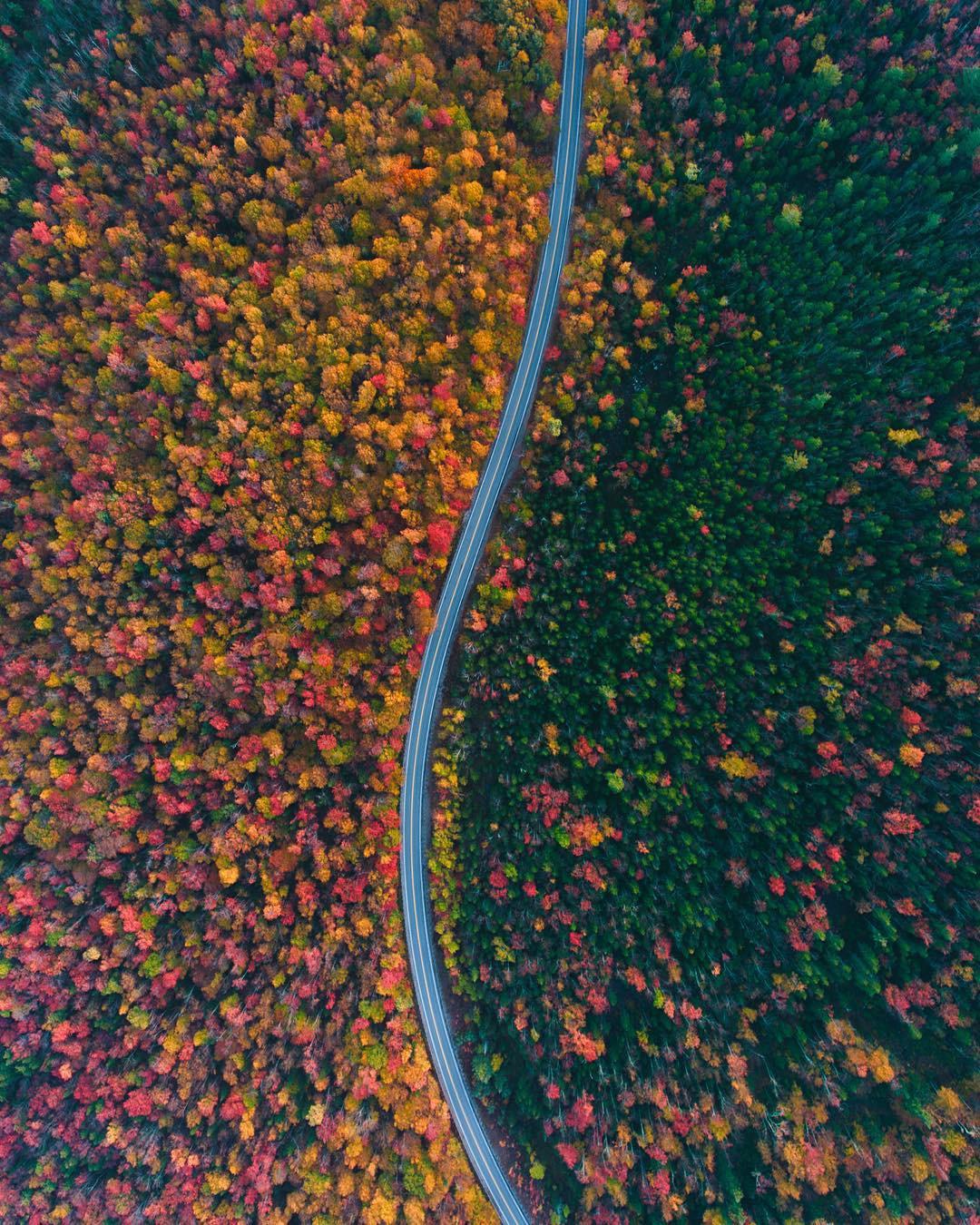 Ngắm phong cảnh đẹp đến ngoạn mục của những khu rừng vào mùa thu - Ảnh 3.