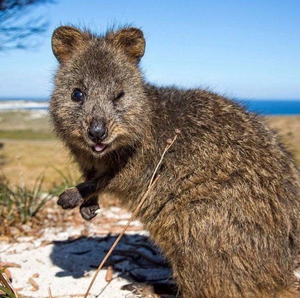 Chỉ ước mình được như loài chuột túi mini hạnh phúc và vui vẻ nhất thế gian - Ảnh 11.
