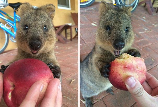 Chỉ ước mình được như loài chuột túi mini hạnh phúc và vui vẻ nhất thế gian - Ảnh 7.