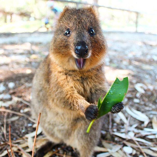 Chỉ ước mình được như loài chuột túi mini hạnh phúc và vui vẻ nhất thế gian - Ảnh 13.