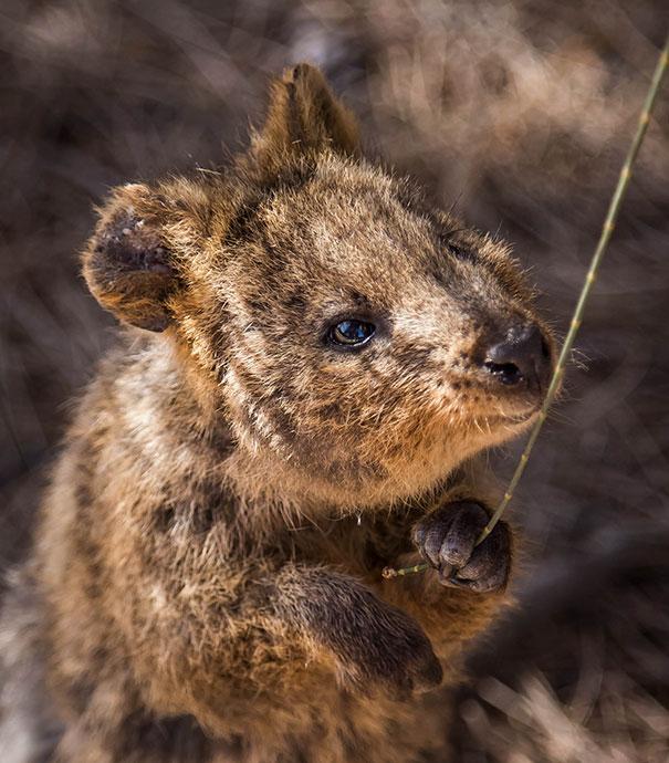 Chỉ ước mình được như loài chuột túi mini hạnh phúc và vui vẻ nhất thế gian - Ảnh 21.