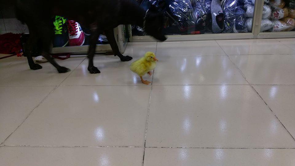 Mua trứng ngỗng lộn về quên không luộc, cô gái tự dưng có thêm con boss lầy lội - Ảnh 2.