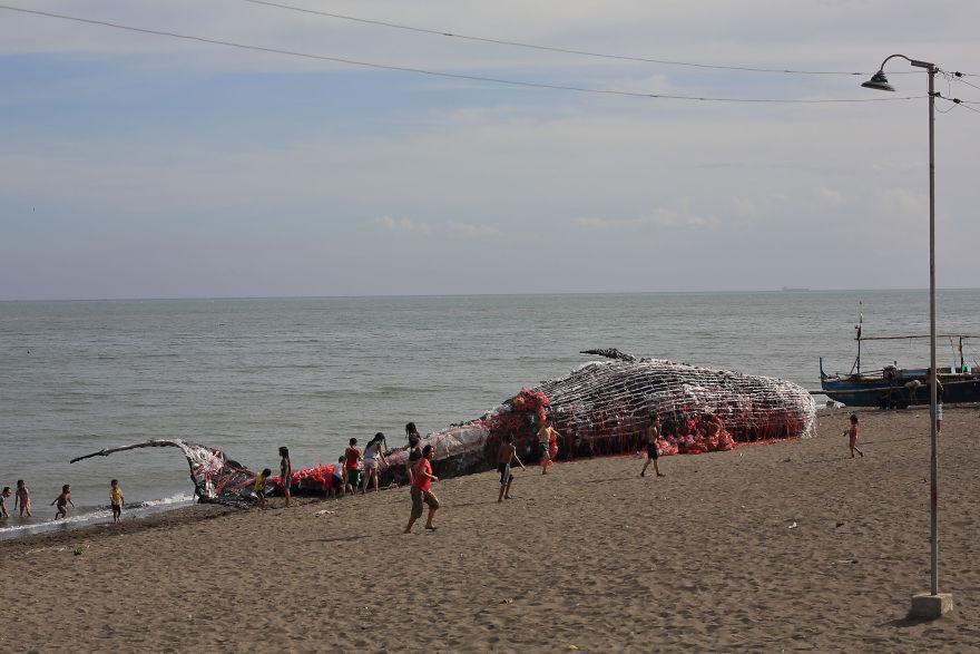 Cá voi khổng lồ nằm chết bên bãi biển, ai cũng sốc khi phát hiện ra thứ bên trong miệng nó - Ảnh 6.