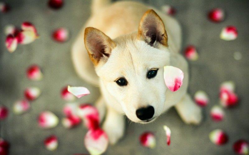 Hút cả trăm nghìn like trên mạng xã hội nhờ những bức ảnh siêu deep của thú cưng - Ảnh 6.