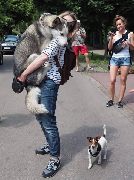 16 minh chứng cho thấy chó là loài nhát gan thì không ai bằng - Ảnh 5.