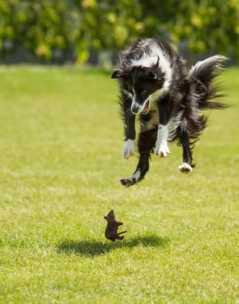 16 minh chứng cho thấy chó là loài nhát gan thì không ai bằng - Ảnh 9.
