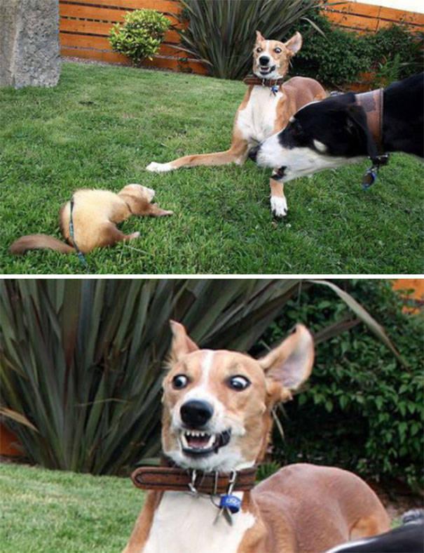 16 minh chứng cho thấy chó là loài nhát gan thì không ai bằng - Ảnh 11.