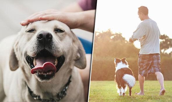 Nghiên cứu quy mô 3 triệu người đã xác nhận một lợi ích tuyệt vời khi nuôi một con chó - Ảnh 3.