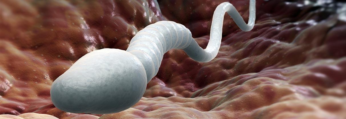 Làm sao để trị dứt điểm ung thư? Tinh trùng có thể là câu trả lời - Ảnh 3.