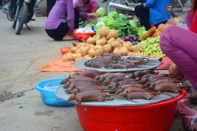 Ở Hà Nội có một ngôi làng mà phụ nữ và trẻ con mê thịt chuột hơn cả thịt lợn, thịt gà - Ảnh 14.