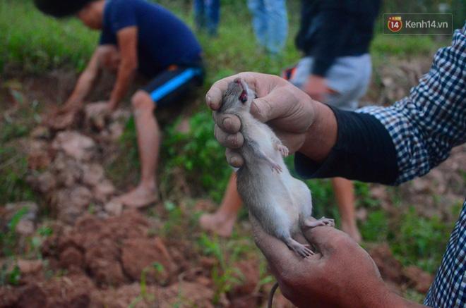Ở Hà Nội có một ngôi làng mà phụ nữ và trẻ con mê thịt chuột hơn cả thịt lợn, thịt gà - Ảnh 2.