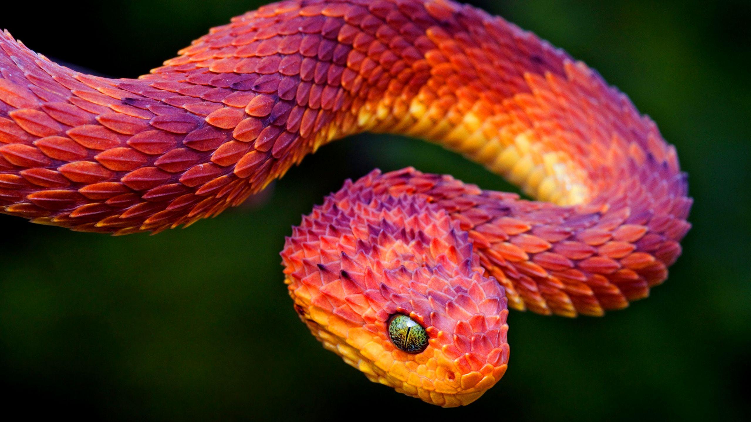 Hóa ra loài rắn trong bản hit mà Taylor Swift mới tung ra không hề tầm thường - Ảnh 4.