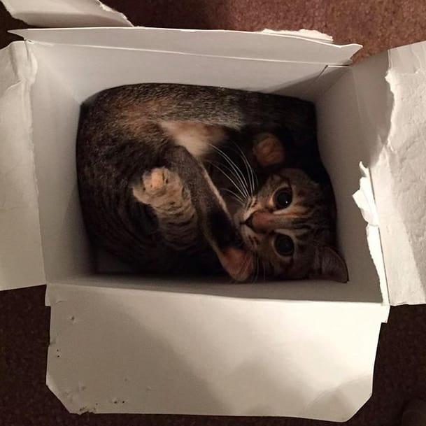 17 chú mèo vô duyên thích chỗ nào là tự tiện chui vào đấy - Ảnh 23.