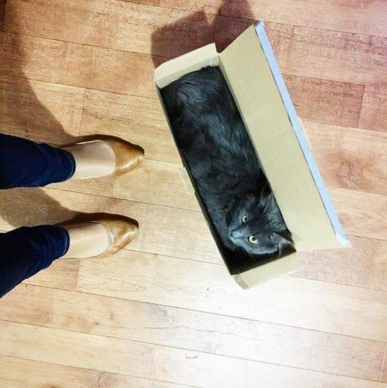 17 chú mèo vô duyên thích chỗ nào là tự tiện chui vào đấy - Ảnh 25.