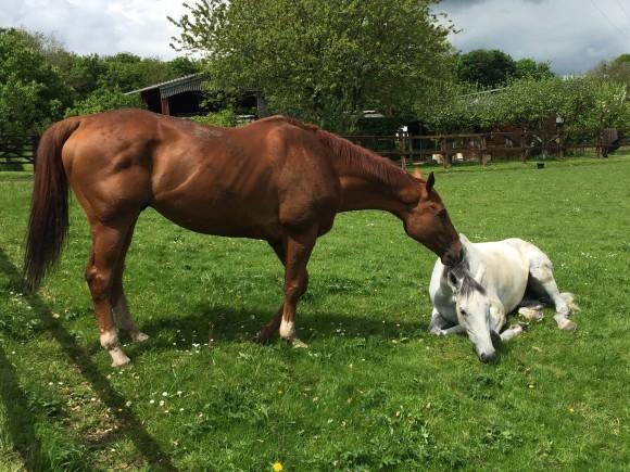Bi kịch tình yêu của hai chú ngựa đua được ví như thiên tình sử Romeo và Juliet - Ảnh 3.