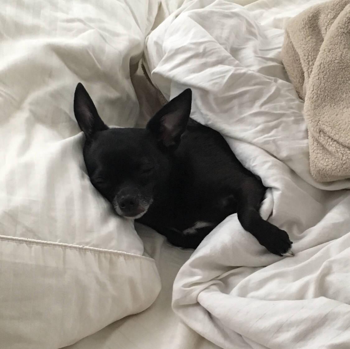 15 chú chó xấu tính chỉ thích độc chiếm một mình một giường mới chịu - Ảnh 7.