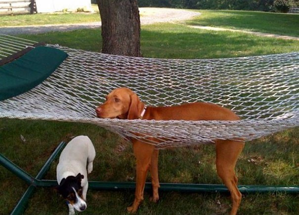 funny-cats-dogs-stuck-furniture-9-151359