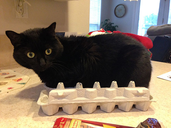 Muôn vàn kiểu chơi trốn tìm hài hước của các thánh mèo - Ảnh 23.