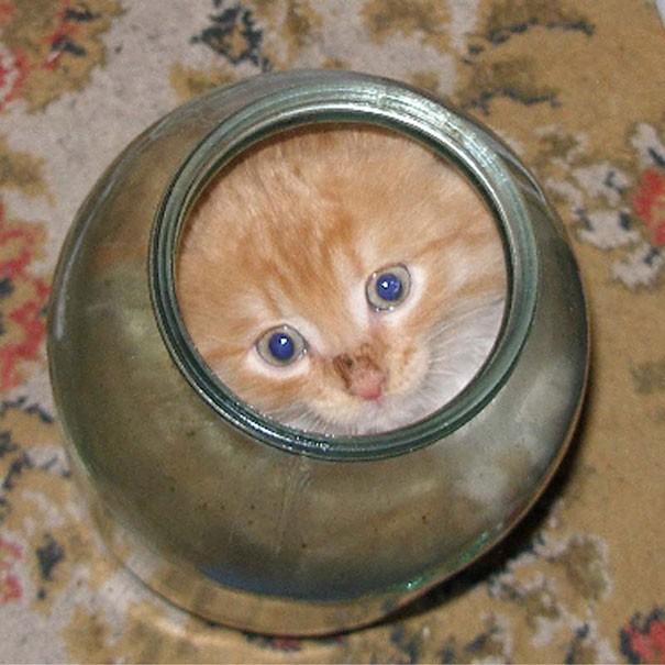 17 chú mèo vô duyên thích chỗ nào là tự tiện chui vào đấy - Ảnh 4.
