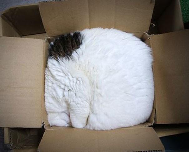 17 chú mèo vô duyên thích chỗ nào là tự tiện chui vào đấy - Ảnh 31.