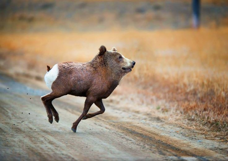 Những loài vật mới chỉ xuất hiện gần đây trong thời đại photoshop - Ảnh 9.