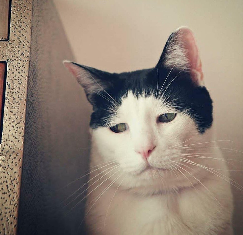Chú mèo Nhật Bản với gương mặt buồn rười rượi, thương ơi là thương! - Ảnh 7.