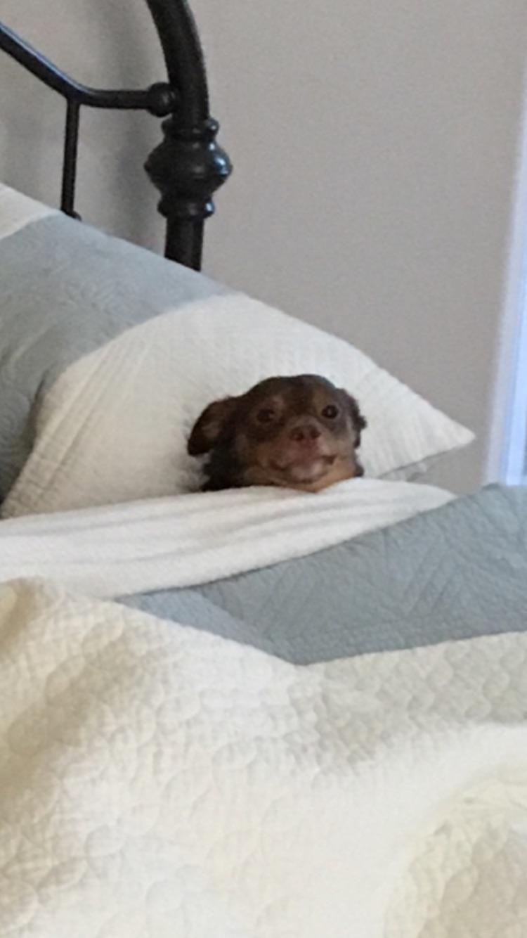 15 chú chó xấu tính chỉ thích độc chiếm một mình một giường mới chịu - Ảnh 19.
