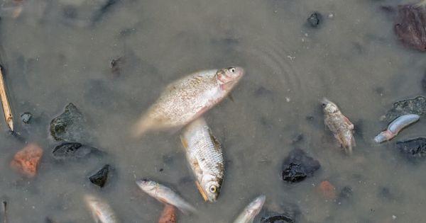 Sinh vật biển đang tan rã - Trái đất lâm nguy vì biến đổi khí hậu - Ảnh 2.