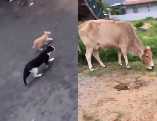 Thanh niên đi khắp phố chỉ mặt chó mèo và tuyên truyền: Rọ mõm đâu sao không đeo vô, mấy đứa Sài Gòn bị bắt hết rồi đó! - Ảnh 4.