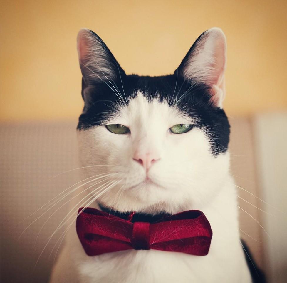 Chú mèo Nhật Bản với gương mặt buồn rười rượi, thương ơi là thương! - Ảnh 13.
