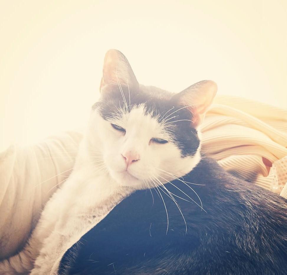 Chú mèo Nhật Bản với gương mặt buồn rười rượi, thương ơi là thương! - Ảnh 9.