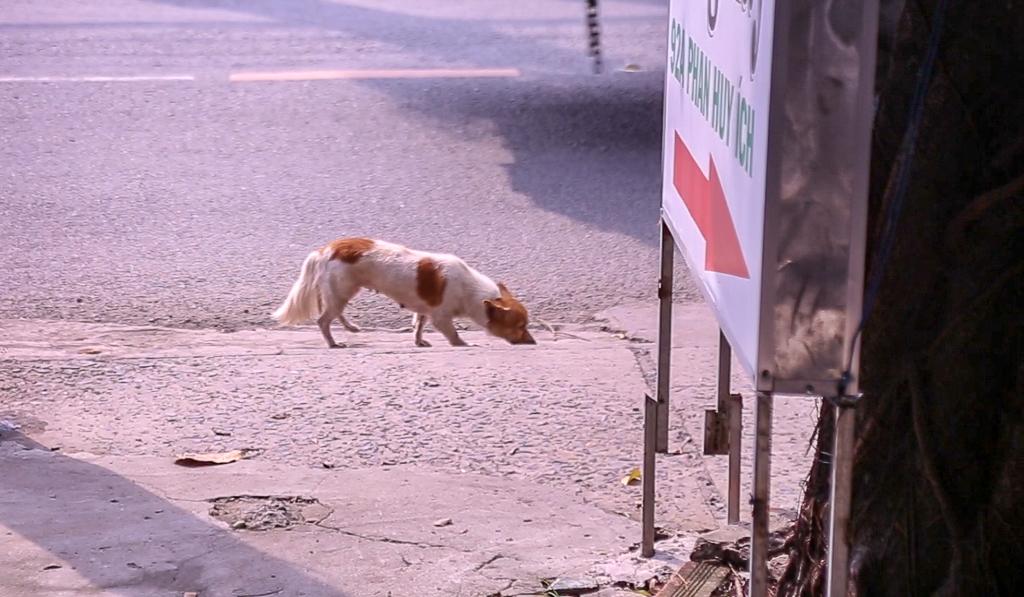 Clip người Sài Gòn nói về việc tiêu hủy chó thả rông nếu chủ nhân không đến nhận sau 72 giờ: Ủng hộ quy định nhưng cần hành động nhân văn - Ảnh 2.